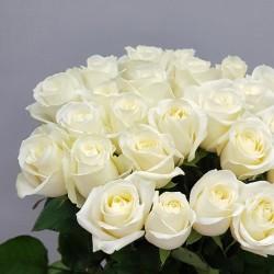 «25 белых крымских роз»