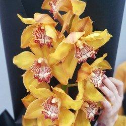 «Волшебная орхидея»